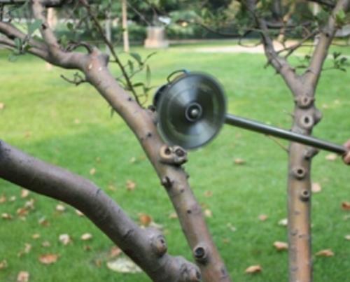 江苏绿化树木