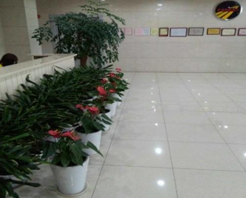 江苏绿色植物